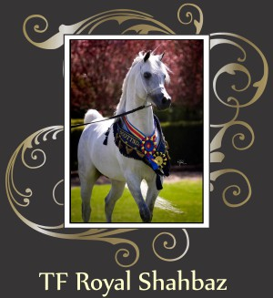 TF_ROYAL_SHAHBAZ.jpg
